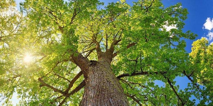 Nakreslete strom! Co jeho tvar prozradí o vaší povaze a emocích?
