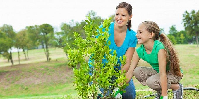 Co vysadit na zahradu v dubnu: Zelenina, letničky i bylinky, na které je čas