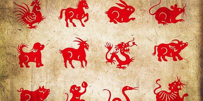 Horoskop na tento týden: Psy čeká láska, Vepři, pozor na peníze