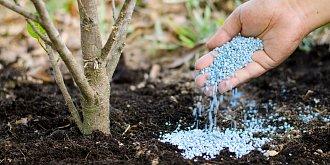V březnu začínáme hnojit zahradu. Nezapomeňte na trávník, česnek i keře