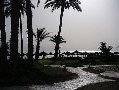 Cesta na pláž lemovaná palmami