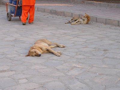 Jak je vidět,ani psům to vedro nesedí