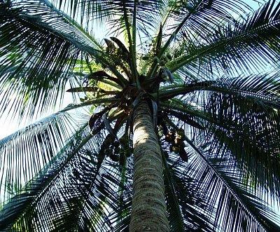 Stín pod palmou