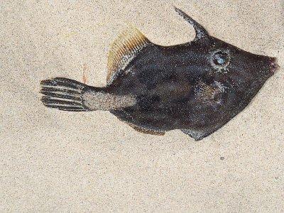 rybka (nahrál: admin)