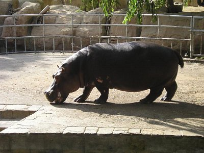 zoo barcelona (nahrál: denisa )