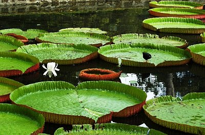 Botanická zahrada (nahrál: emiliana)