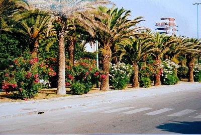 Palmová promenáda kousek od moře. (nahrál: kotoule)