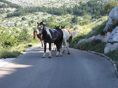 Biokovo - Horská silnice na sv.Jure