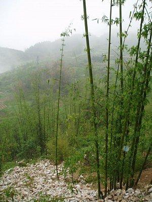 Bambus (nahrál: admin)