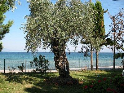 Skala Sotiros - Pohled na moře přes zahradu ze studia Vila Theo
