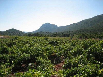 Žuljana  - Všude kolem jsou jen vinice a hory (nahrál: RadulkaP)