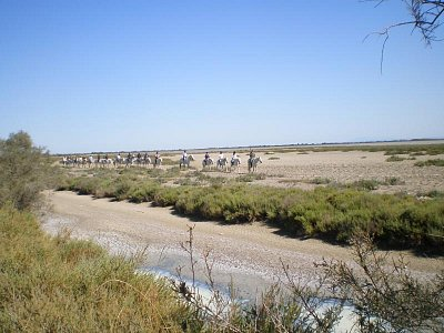 Camargue-Vyjížďka koních (nahrál: Vlaďka)