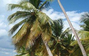Dominikánská republika -Boca chica, listopad 2009