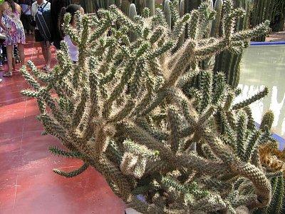 Kaktus v záhrade (nahrál: Malíková Margita)