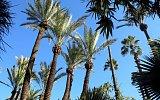 Marrakech - záhrada - (Jardin Majorelle)
