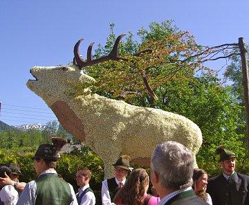 Rakousko - Solná komora - festival narcisů