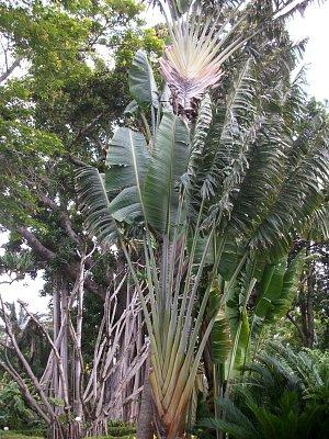 Tenerife 2011 - Loro park a botanická zahrada