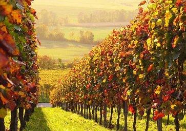 Vína ze San Marina