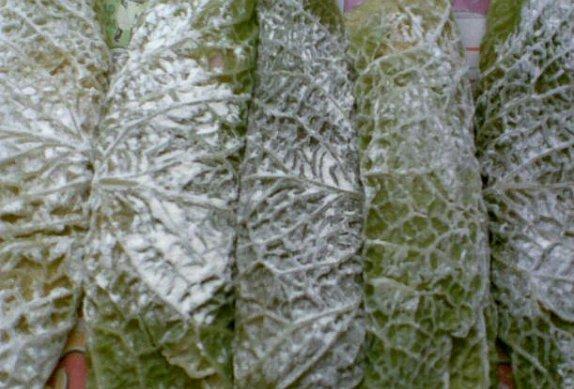 Smažené plněné kapustové listy (závitky)