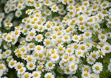 Jedlé bylinky a rostliny: Co roste na jaře a dá se jíst?