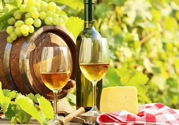 Souboj mladých vín aneb co přinesla letošní sezóna